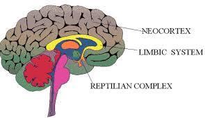 Perché il nostro cervello è programmato per essere sociale - 1